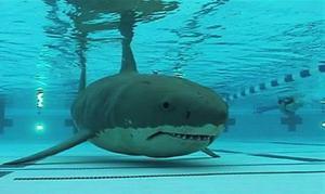 2424694-shark_in_pool2_super