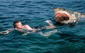sharkattack_1778841b